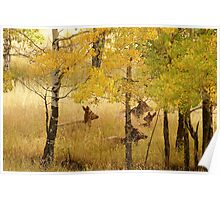 Lounging In Autumn Poster