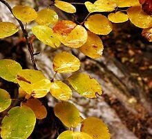Glistening Leaves by David Kocherhans