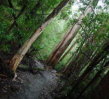 Tahune Forest, Tasmania by imaginethis