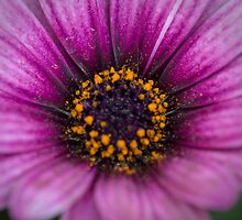 Flower in the morning by Claes  Touber
