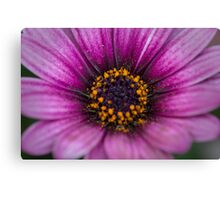 Flower in the morning Canvas Print