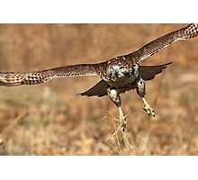 Red-Tail Hawk Photographic Print