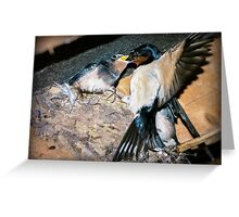Swallow feeds chick. Greeting Card