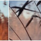 Pinhole Experiments: Grass by rosiephoto