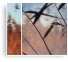 Pinhole Experiments: Grass Canvas Print