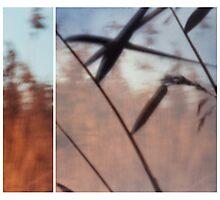 Pinhole Experiments: Grass Photographic Print