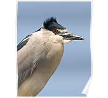Black Crowned Night Heron Poster