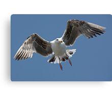 Inbound Sea Gull Canvas Print