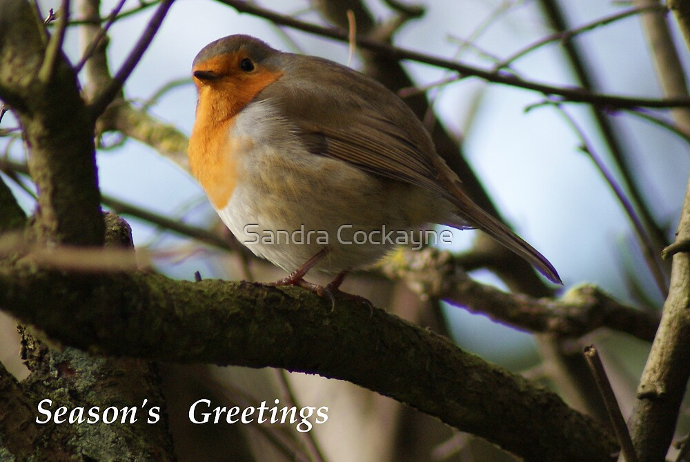Season's Greetings ~ Robin ~ by Sandra Cockayne