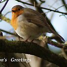 Season's Greetings ~ Robin ~ by Sandra Cockayne
