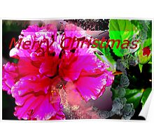 Double hibiscus Christmas greeting Poster