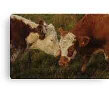 Cows Girlfriends I Canvas Print