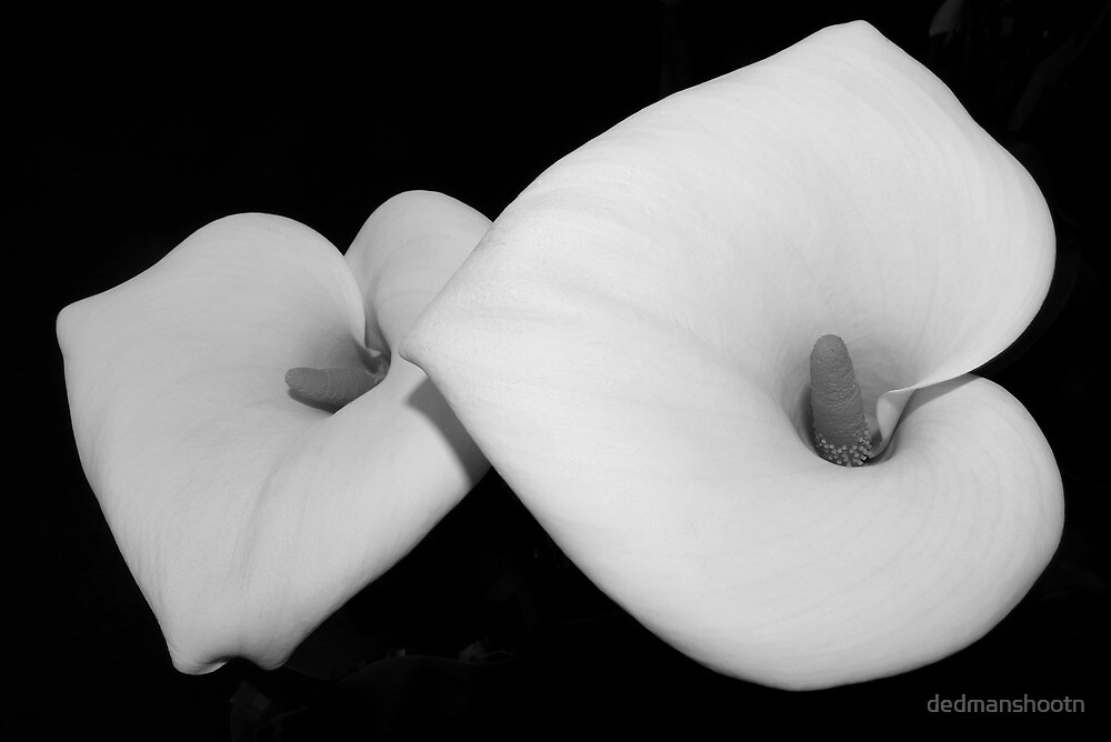 calla lily pair by dedmanshootn