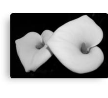 calla lily pair Canvas Print