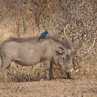 The Warthog and the bird by Sara Friedman