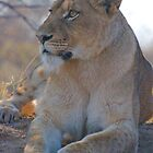 Young Lioness on Watch by Sara Friedman