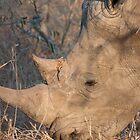 The Horned Beast by Sara Friedman