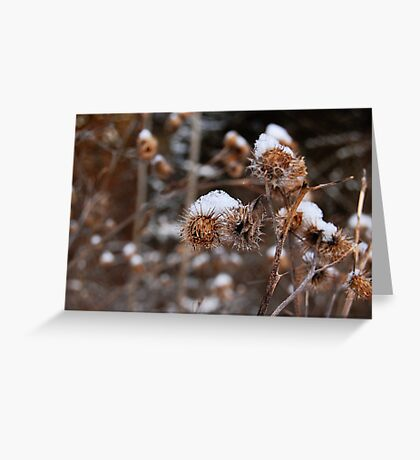 Fruit and snow Greeting Card