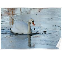 Wintry swan Poster