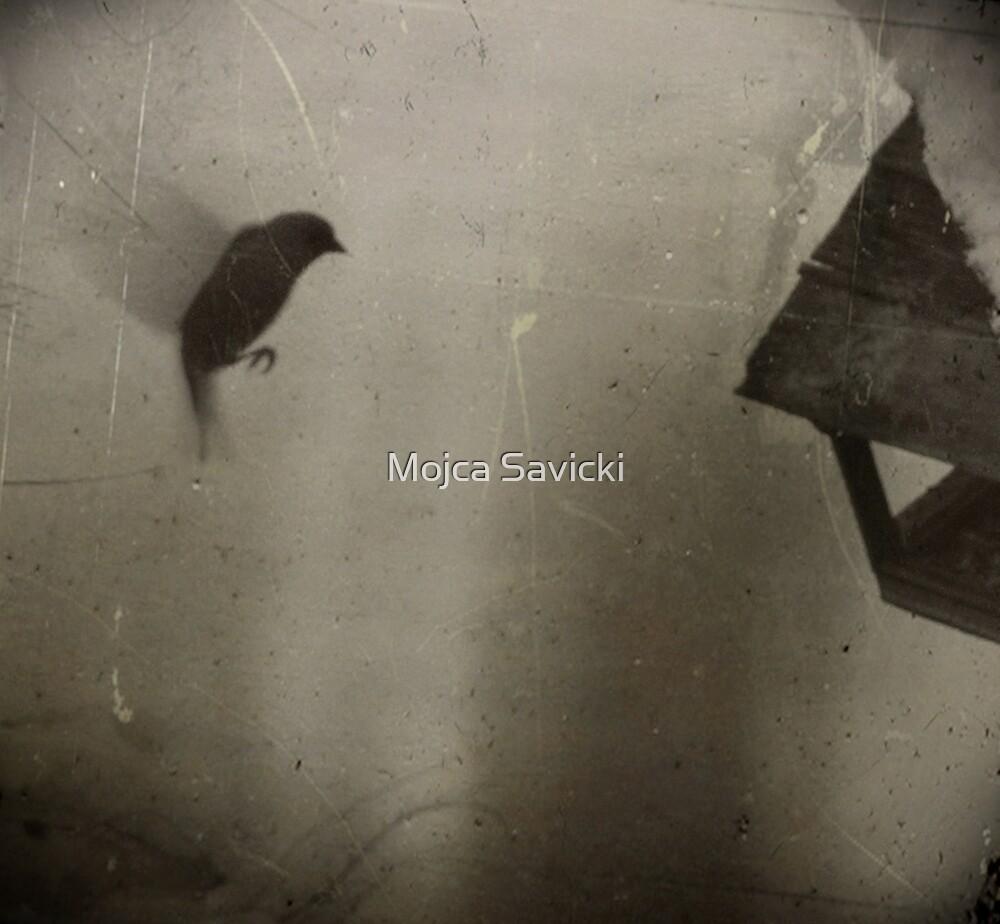 In Flight by Mojca Savicki