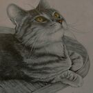 Cat on a table by Pam Humbargar