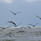 birds flying over a beach by Robert Brown