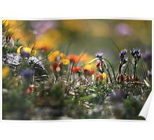 Helios Cliff Flowers -Vintage Russian Lens on Canon Eos Poster