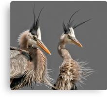 Heron Car Wash Canvas Print