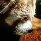 Red Pandas by NonfatalNerdism