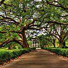 Louisiana Plantation by Kate Adams