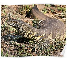 Nile Water Monitor Poster