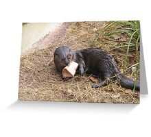 Beautiful Spotted-necked Otter Greeting Card