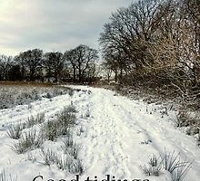 Tree lined path - Christmas Card by Tom Gomez