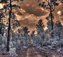 Jarrahwood forest track IR by BigAndRed