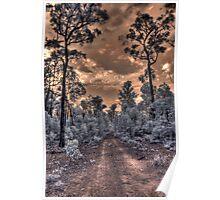 Jarrahwood forest track IR Poster