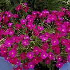 pink planter corner by dedmanshootn