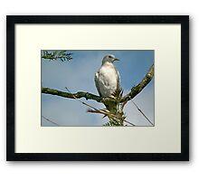 Partridge in a pear tree! Framed Print
