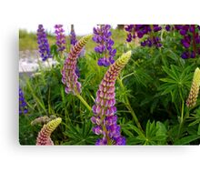 curly lupin Canvas Print