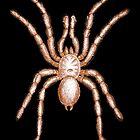 Tarantula Spider by Kawka