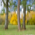 Softly Defining Fall in Quercy by A.M. Ruttle