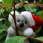 Koala Christmas by AmyBonnici