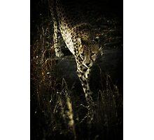 Stalking Photographic Print