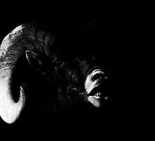 Ram by KatsEyePhoto