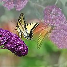 Butterfly Mirage by Diane Schuster
