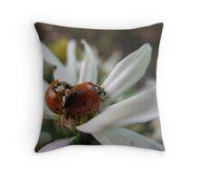 Ladybug Courtship Throw Pillow