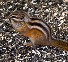 Pretty little chipmunk in a park by Ann Reece