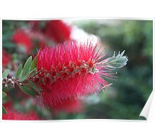 bottle brush Poster