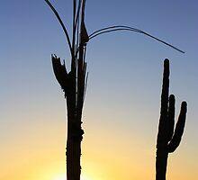 Arizona Sunset by Candy Gemmill
