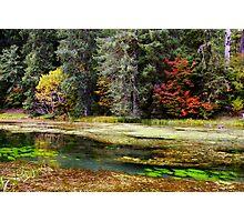autumn spring Photographic Print