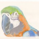 A Macaw of many pretty colours for Anthony by LadyE